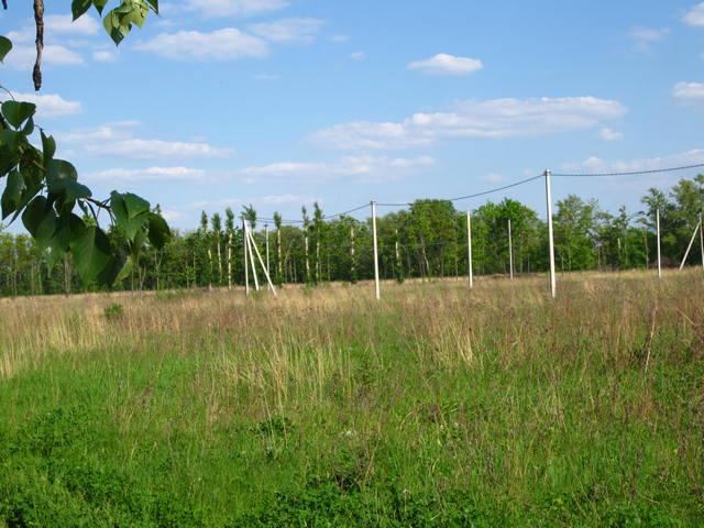 Дачный участок, Новорязанское шоссе 56 км. от МКАД